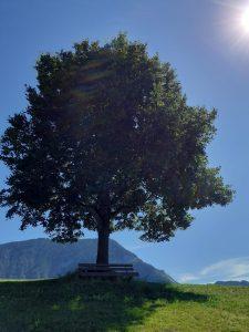 wunderschöner Baum unter blauem Himmel