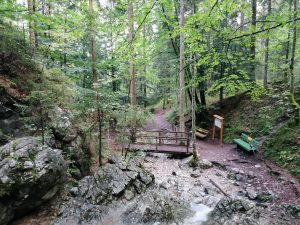 Waldweg mit Brücke